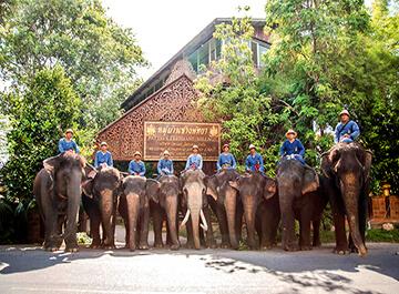 دهکده فیل های پاتایا ( The Elephant Village )