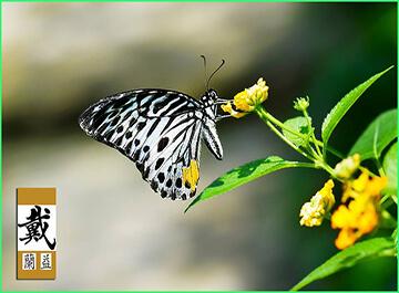 پارک پروانه کوالالامپور ( kl erfly park )
