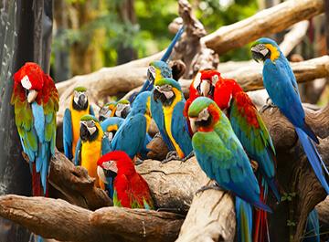 باغ پرندگان مالزی ( Kuala Lumpur Bird Park )