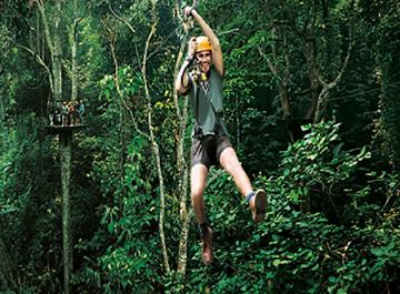 جنگل گیبون تایلند ( Thailand Gibbon Forest )
